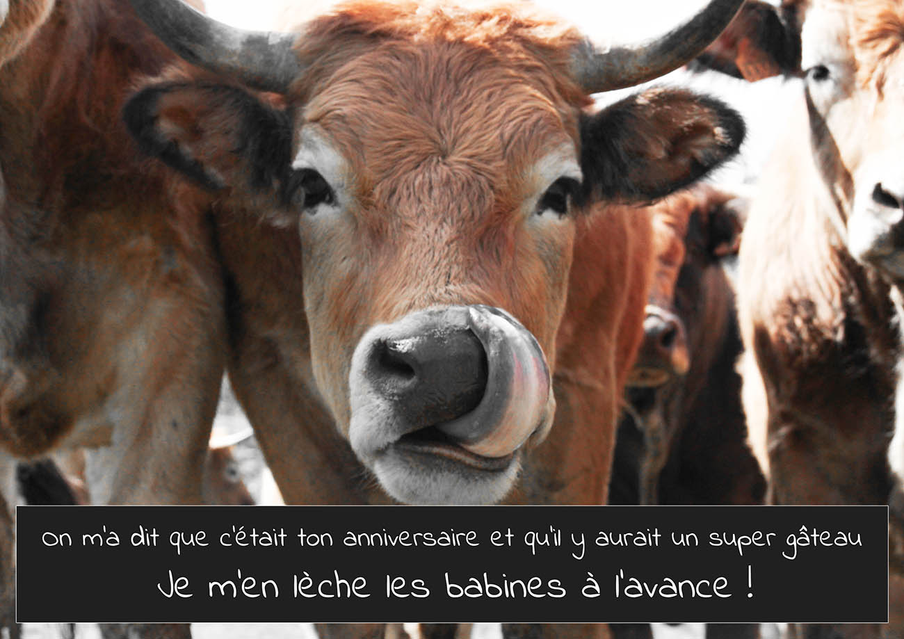 Jeu de carte vache - Photo de vache drole ...